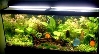 Natural Garded Aquarium, aquarium plants, garden aquarium, Aquarium ...